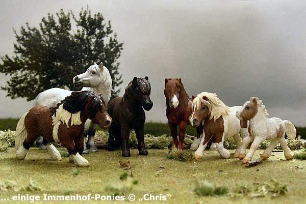 diverse Immenhof-Ponies
