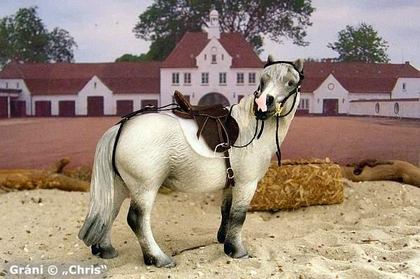 """Gráni - Eines von 2 Ponies, die von Heidi Brühl in ihrer Rolle als """"Dalli"""" geritten wurden ..."""